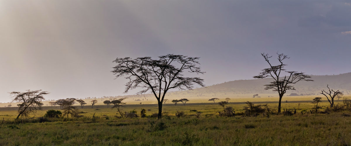 Serengeti nationapark udsigt