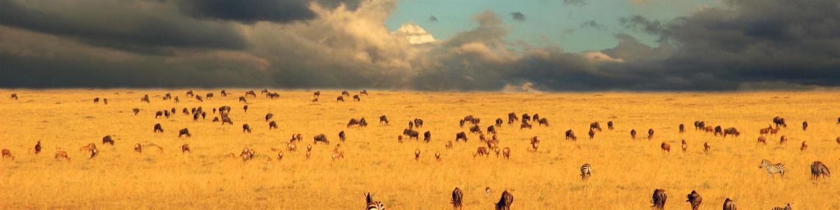 Serengeti sletten i Tanzania