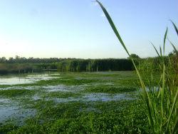 Vanhyancinter Victoriasøen