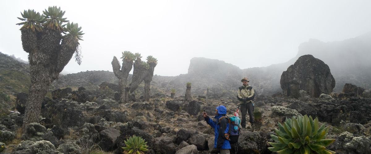 trekkking kilimanjaro og plante