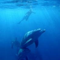 zanzibar delfiner