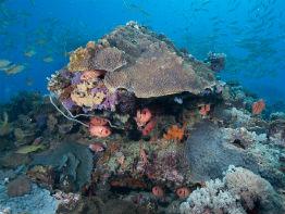 zanzibar koralrev