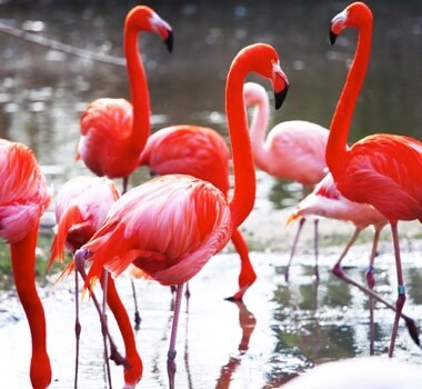flamingoer1