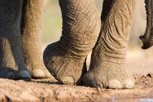 Elefant_close up