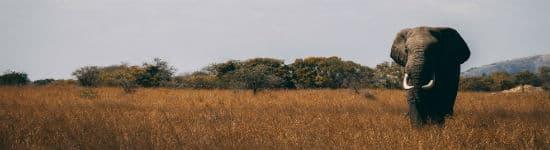 oplev elefanter på Serengeti i Tanzania
