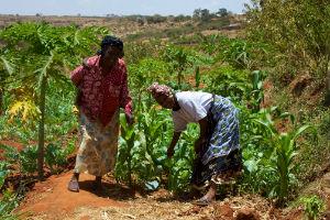 Landbrug i Tanzania