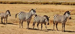 Tanzania Rejser