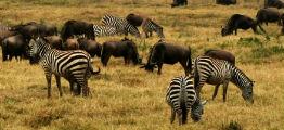 Afrika safari i Tanzania