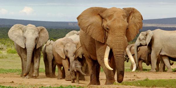 Elefanter i Tarangire nationalpark