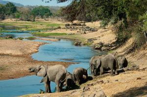 Ruahu flod i Ruaha nationalpark-tanzania