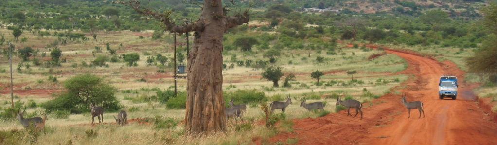Camping safari i afrika