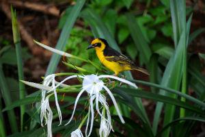 Fugl og vegetation i Udzungwa