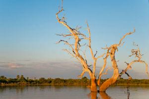 Sø i Selous vildtreservat