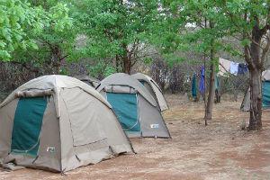telte på camping safari i afrika
