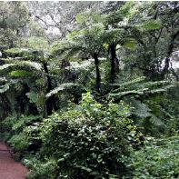 kilimanjaro tropisk