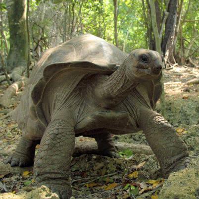 zanzibar skildpadde