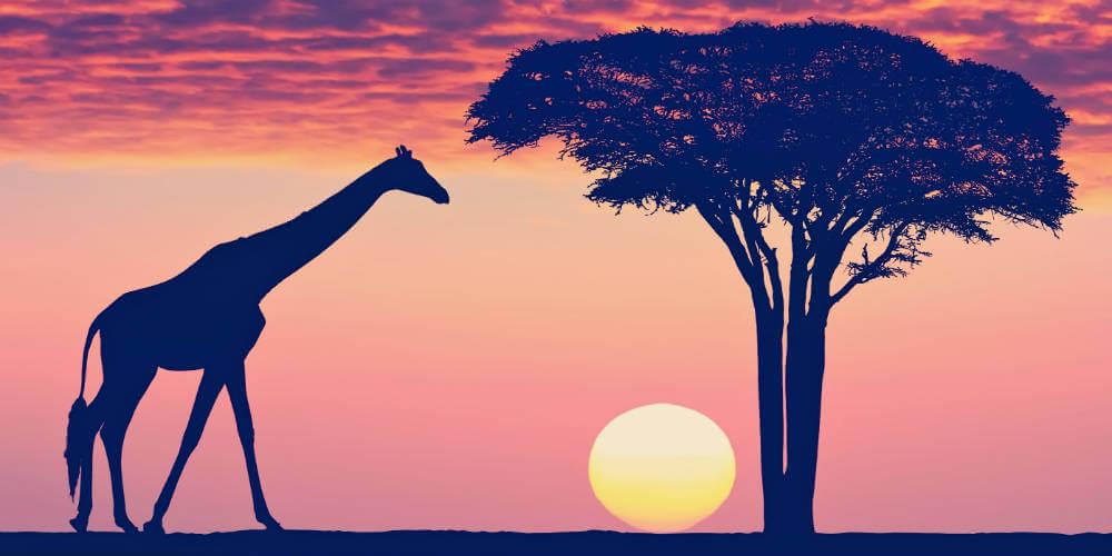 giraf-i-tanzania