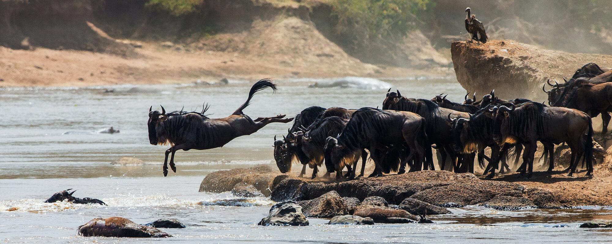 Safari i det nordlige Tanzania