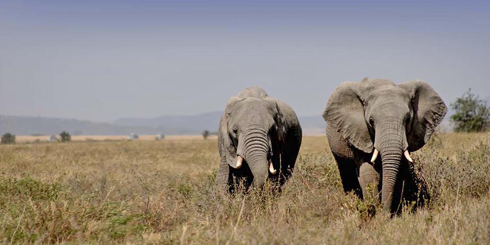 Drømmen om Serengetis endeløse sletter